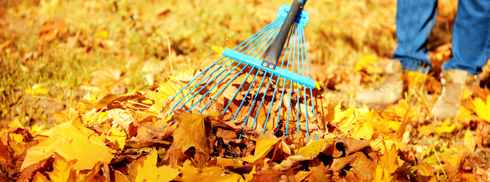 Fall Clean Up November 6-13th